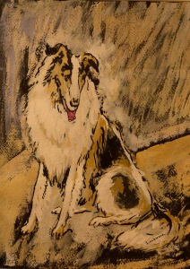 collie-waiting