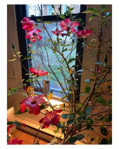 Jay Phyfer | Hibiscus in Winter | photo | $100
